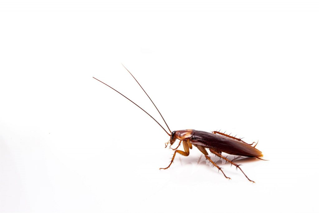 control de roedores e insectos Mallorca